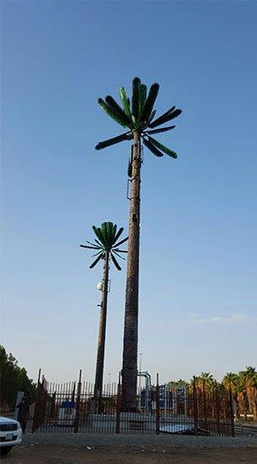GRD-plam-Tree03